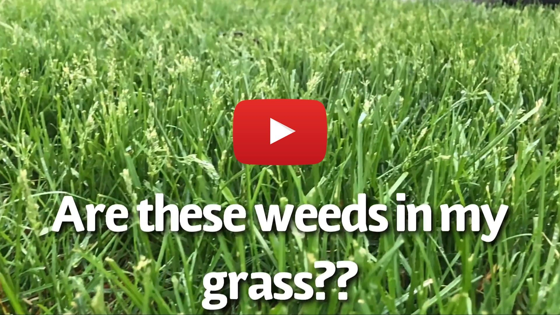 Capital Beach Lawn Care Tip of the Week