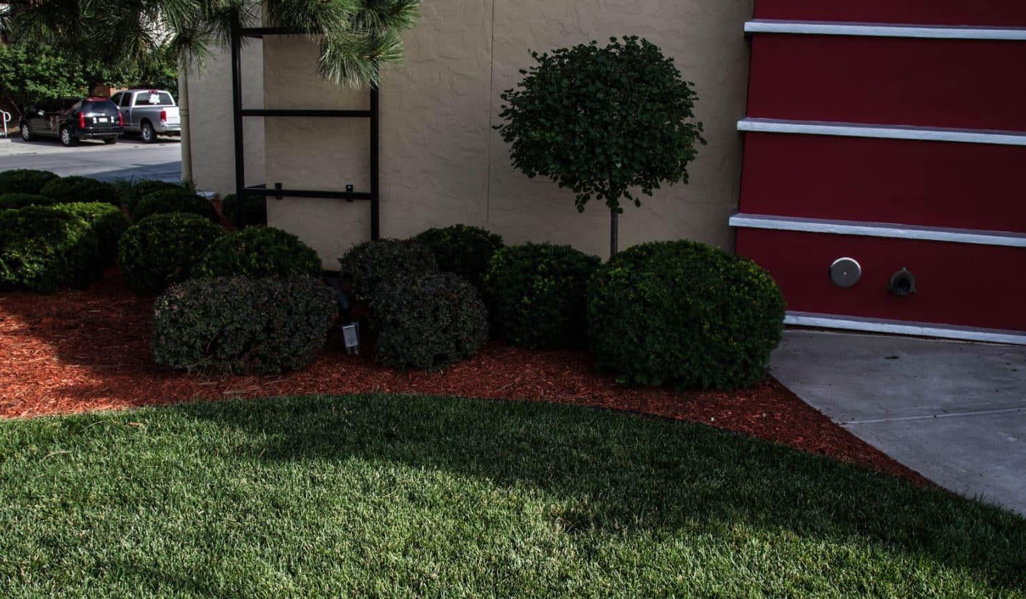 Lincoln Bush Trimming and Pruning