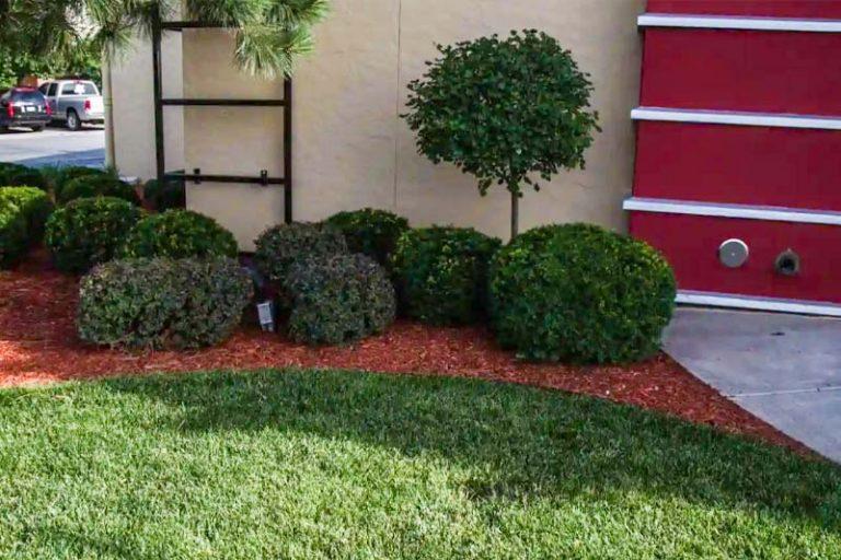 bush trimming